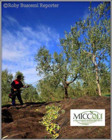 L'olio extravergine d'oliva e l'assorbimento del ferro