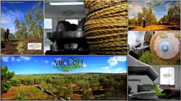 Ogni tipo di olio extravergine d'oliva ha un ruolo benefico contro il cancro